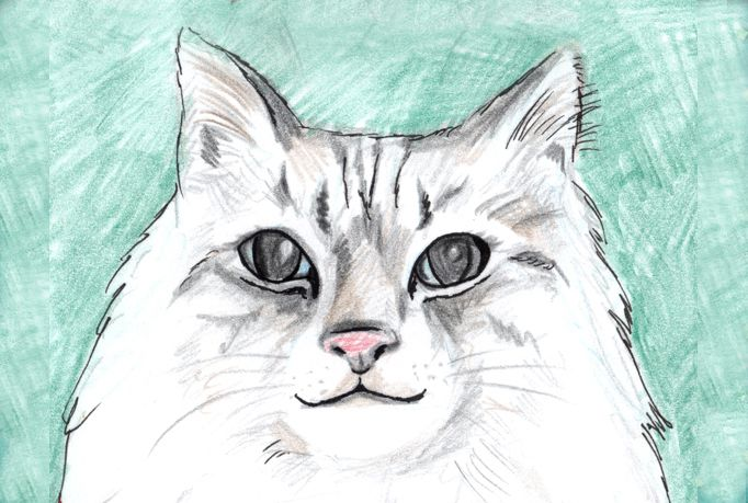Custom requests and commission illustrations, paintings, drawing artwork by Alyshells starting at just $5 on fiverr!  http://www.fiverr.com/alyshells