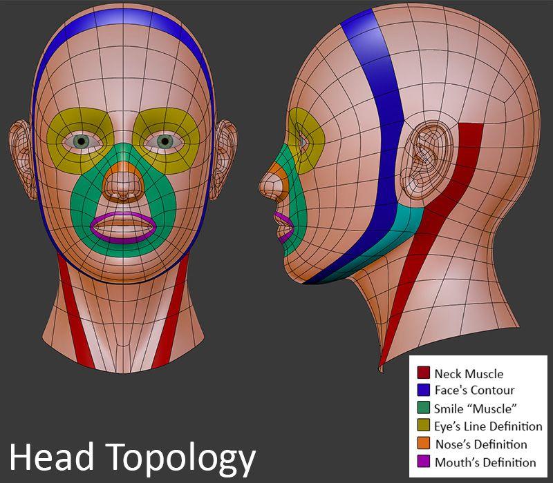 imagen de referencia para modelar rostro en 3d, topologia del rostro