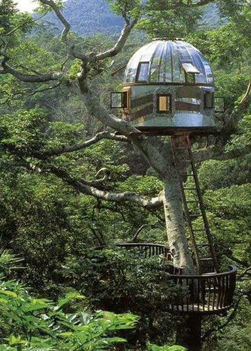 Treehouse very cool would love to spend a night in this for Cool small tree houses