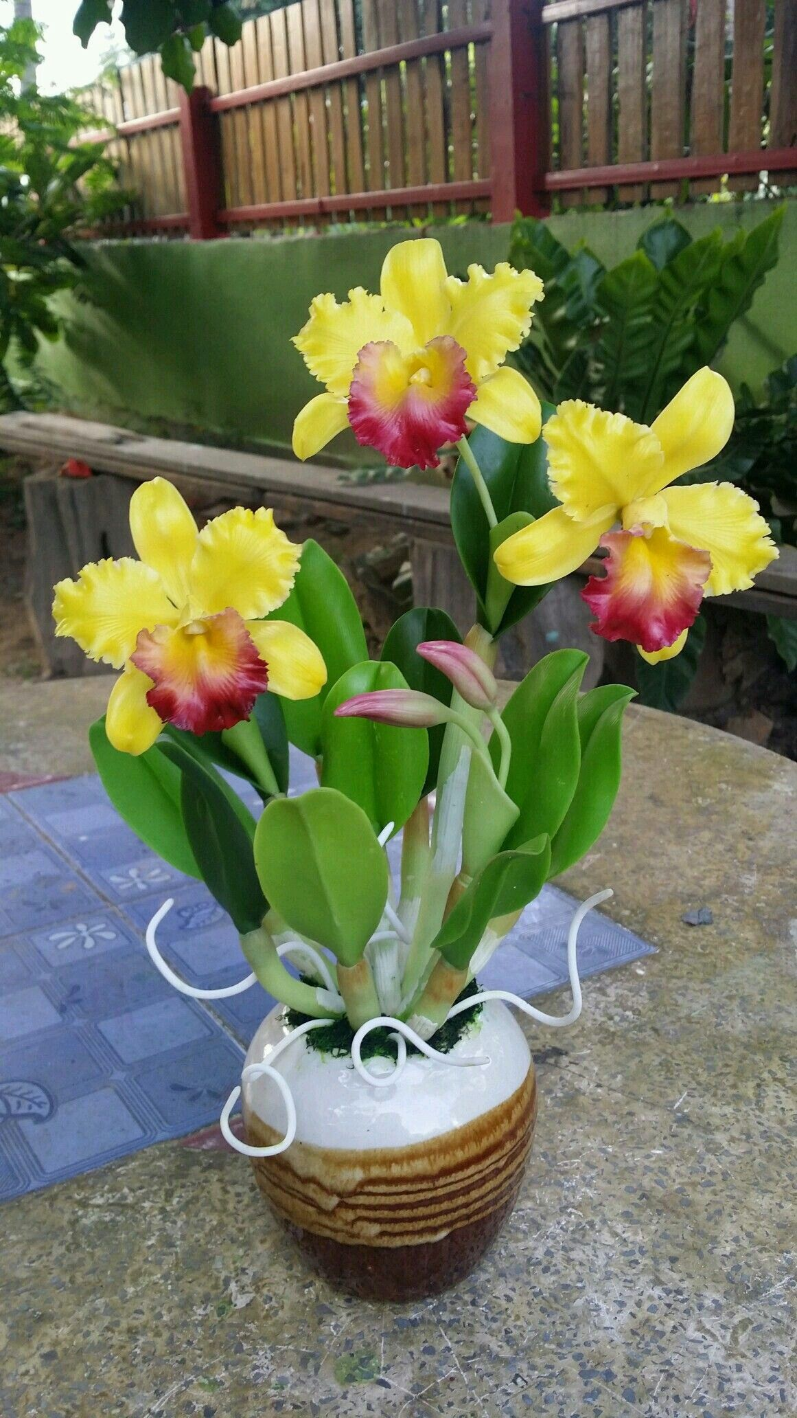 Pin By Flowers In Heart On Cattleya Orchids - Pinterest
