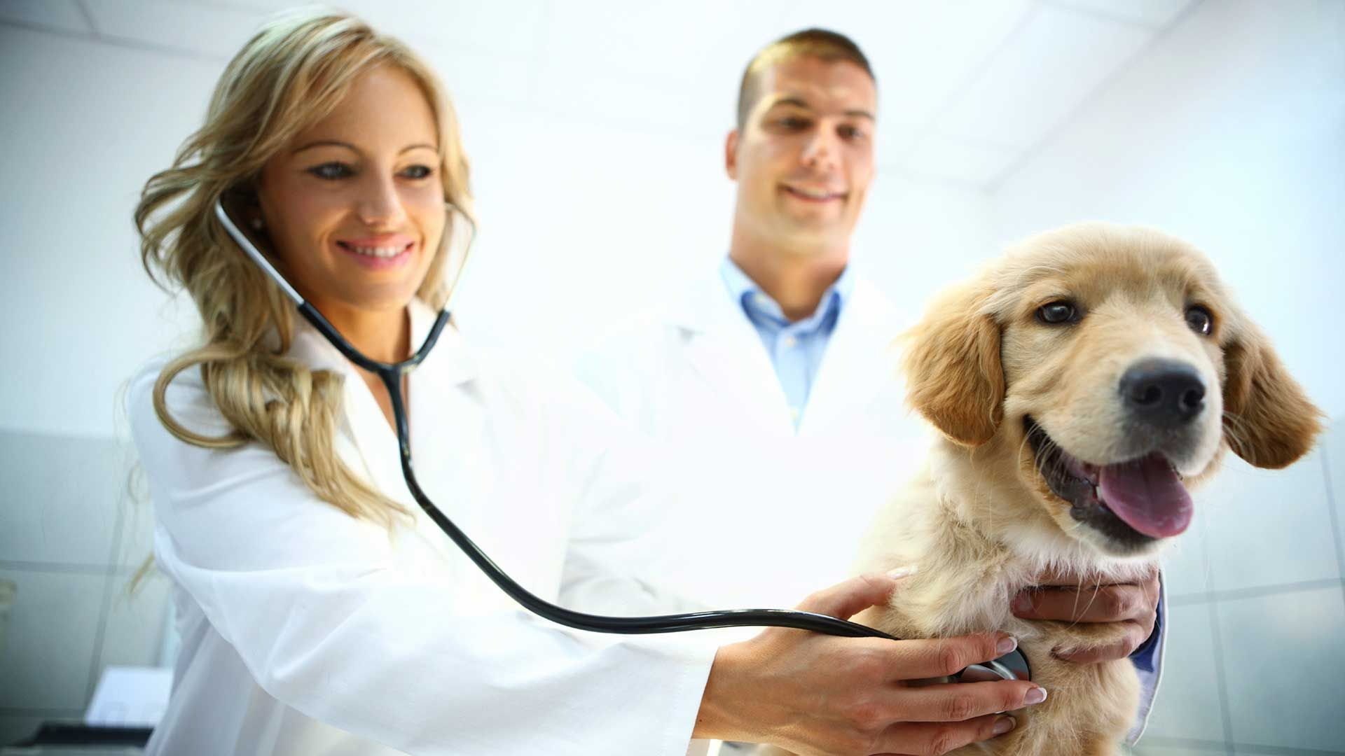 Pets Vets And Debts The Nature Of Things Science Wildlife And Technology Pets Pet Vet Veterinary Care