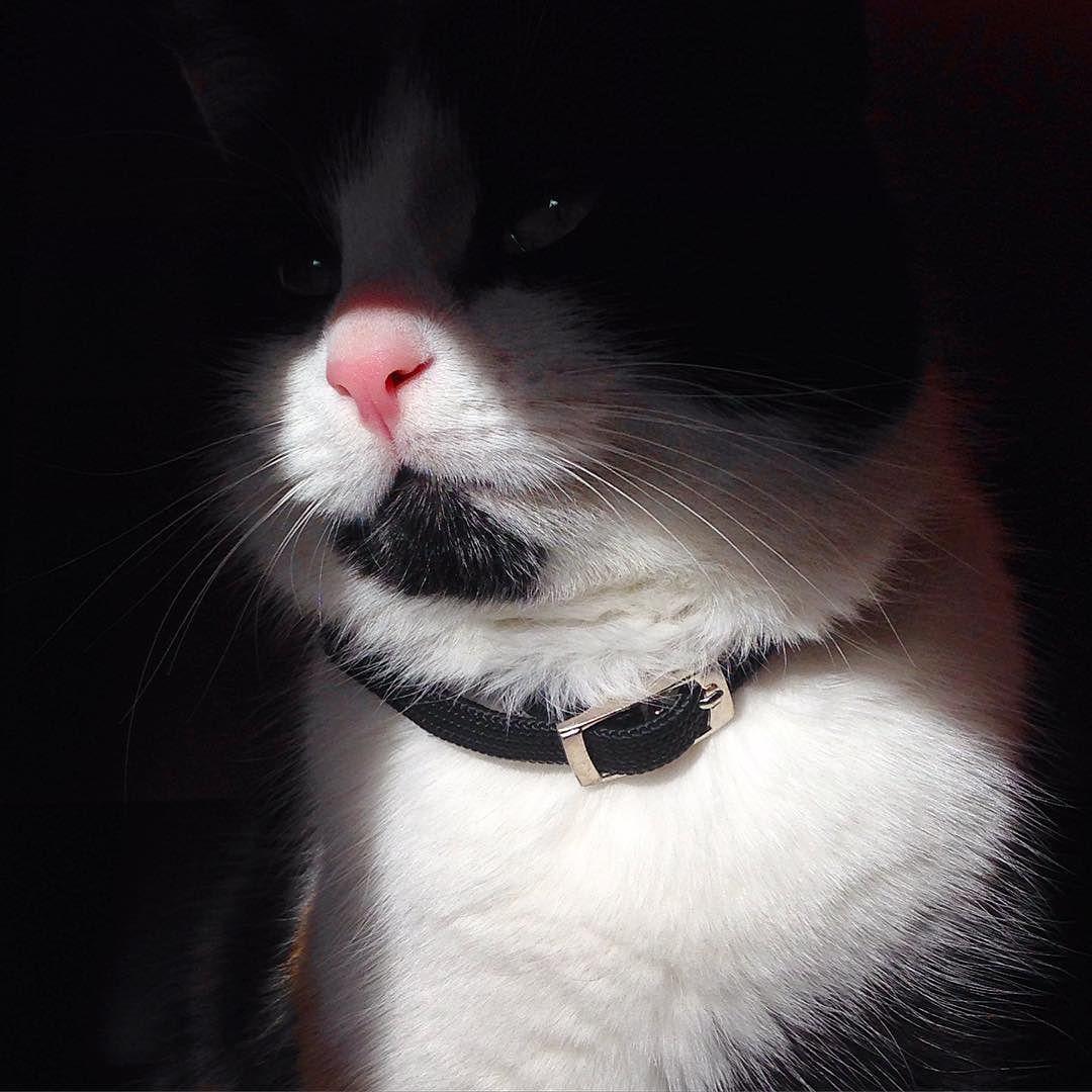Kis Kamilla On Instagram Sun Sunshine Cat Cute Instagood Ilovemycat Kitten Mik Adorable Tiny Catnose Love Cat Nose Kitten Cats
