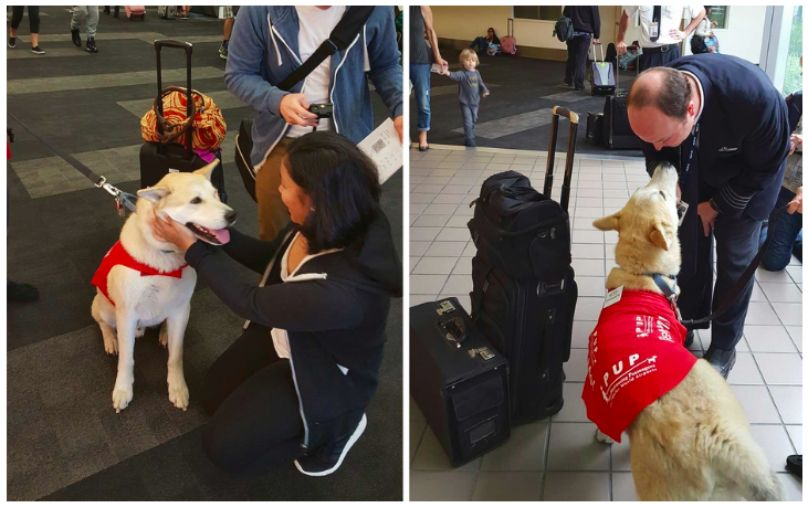 Update Airport Therapy Dogs Are Calming Nervous Travelers All Around The World Therapy Dogs Dogs Working Dogs