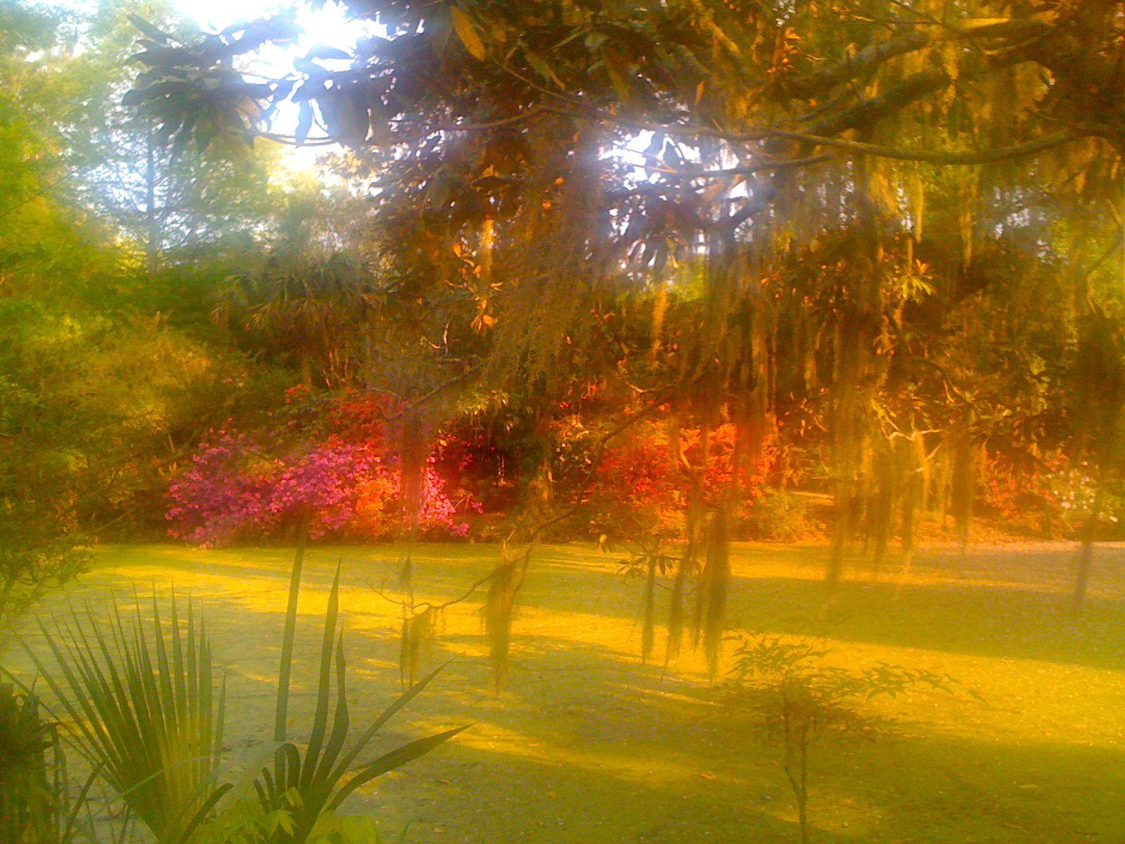 Magnolia Plantation & Gardens - Charleston, SC | CHARLESTON ...