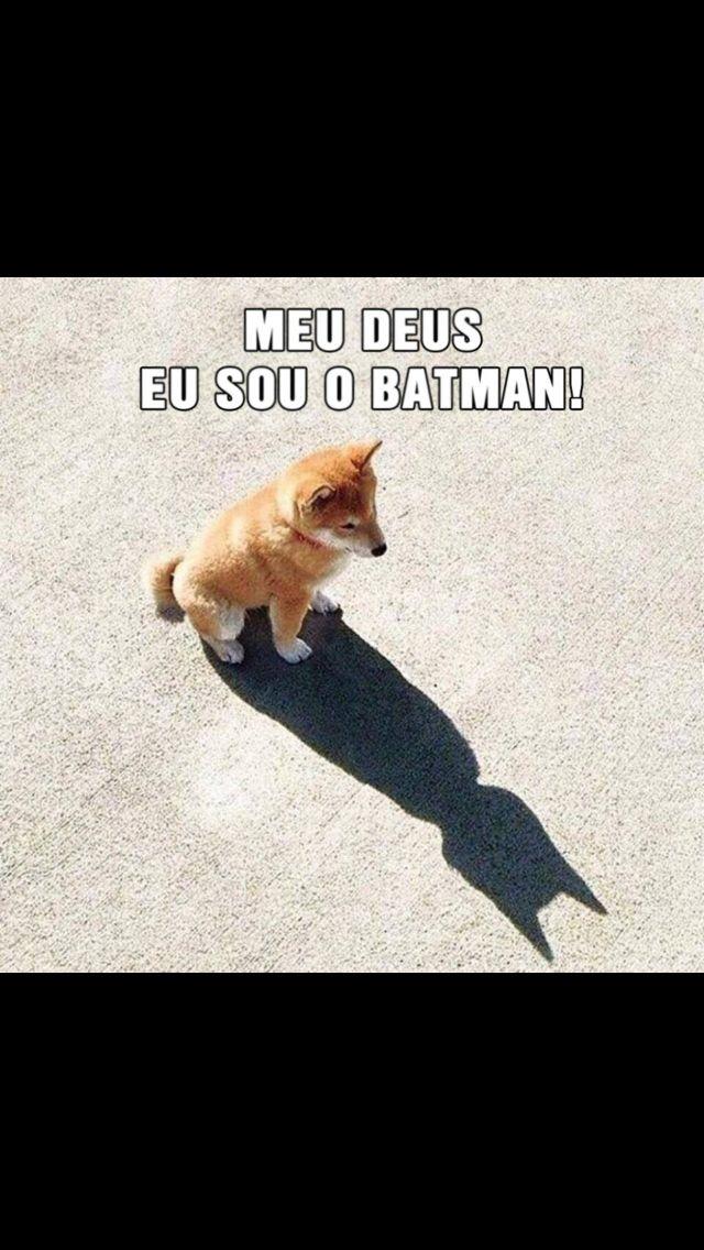Batman Animais Bonitos Animais Fofos Engraçados E Frases