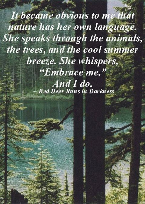 Beautiful Landscape Mother Nature Quotes Nature Quotes Nature Quotes Trees