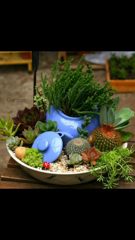 Photo of #containergardeningideassucculents – #containergardeningideassucculents