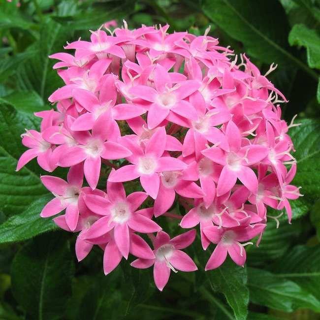 Plantas Que Florecen Todo El Año Jardinería Plantas Con