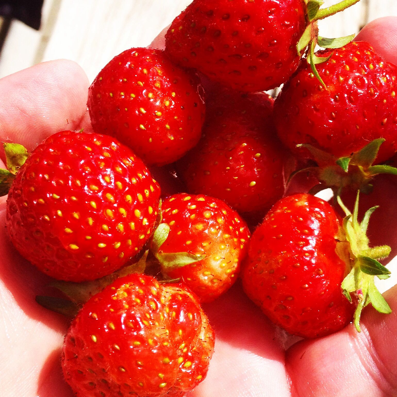 The seasons first strawberrys