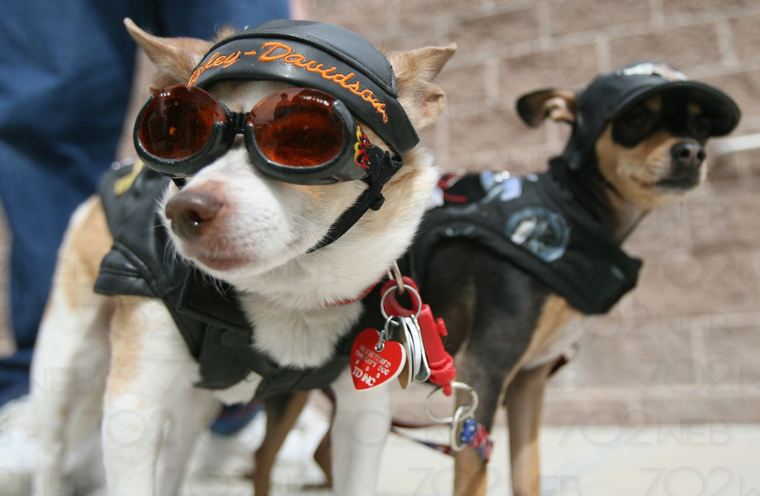 Cats are cool n all, but dogs w/ sunglasses are BADASS