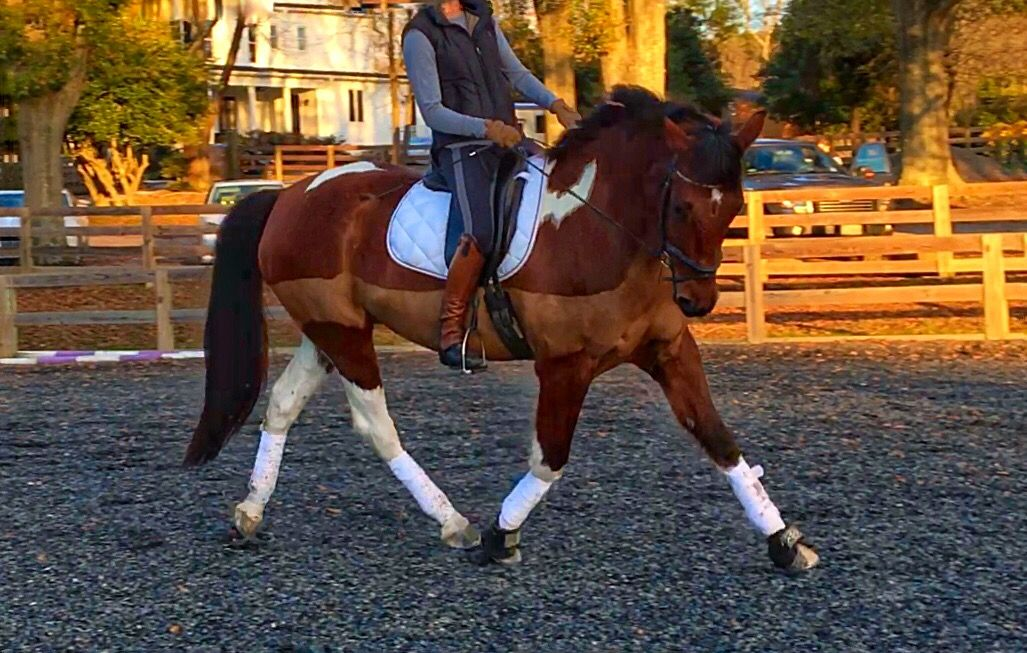 Karen has a lot of really great advice for this dressage rider!