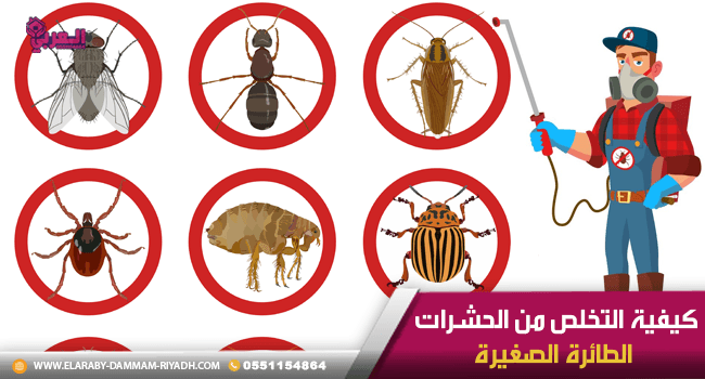 كيفية التخلص من الحشرات الطائرة الصغيرة Flying Insects Dammam Insects