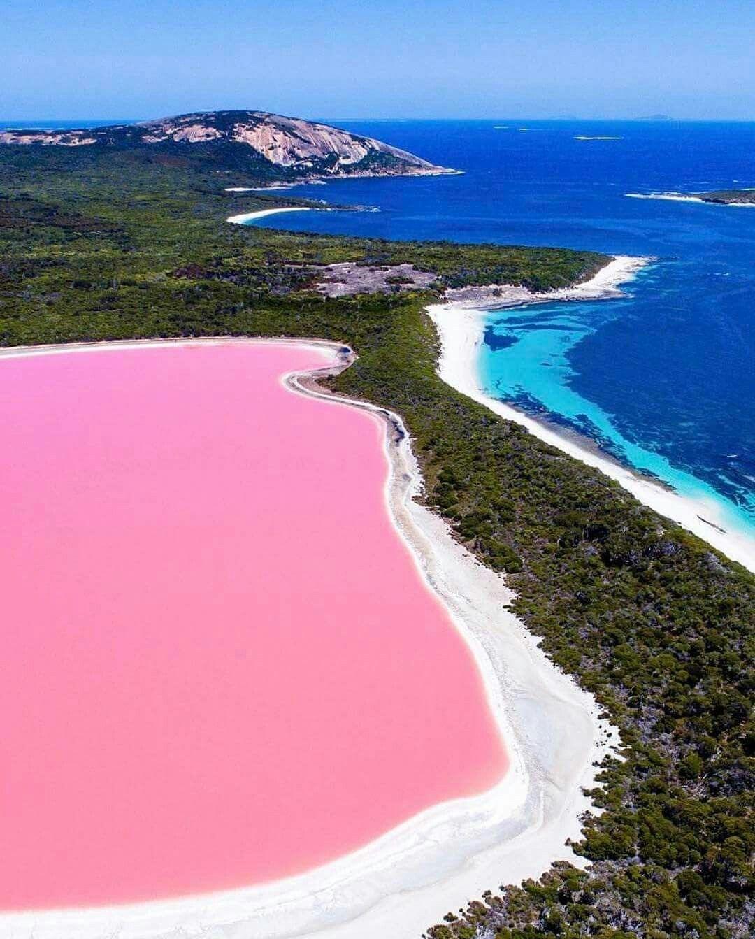 Pink Salt Lake Western Australia Photo By Salty Wings