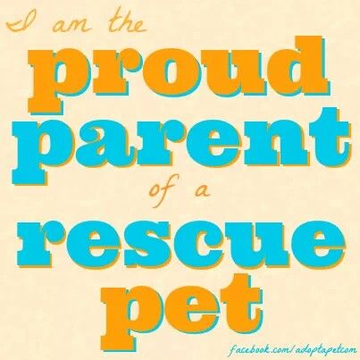 I have 3 cats and 1 dog and all but 1 cat came from a shelter or rescue.