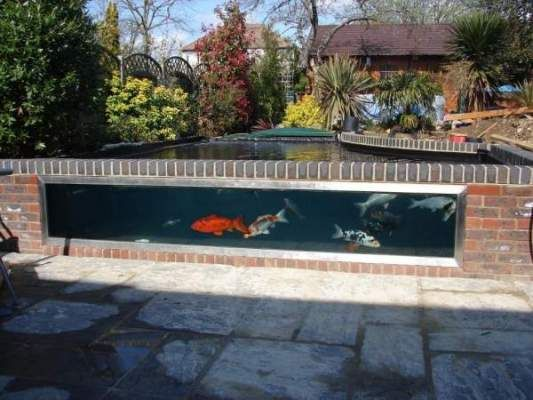 Pond with window landscaping pinterest pond water for Koi pond window