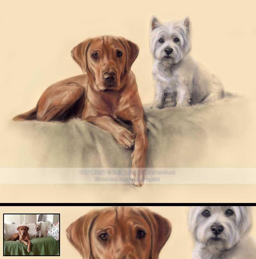 Conte Pastel Portrait Of Labrador Westie Pet Portraits Dog Portraits Cat Portraits