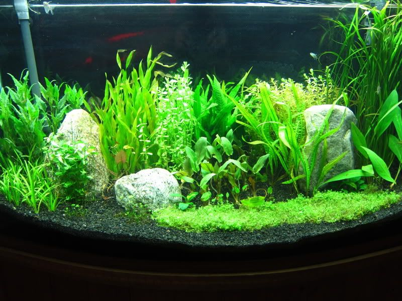 The best tom barr 39 s low tech start up tank method for Co2 fish tank