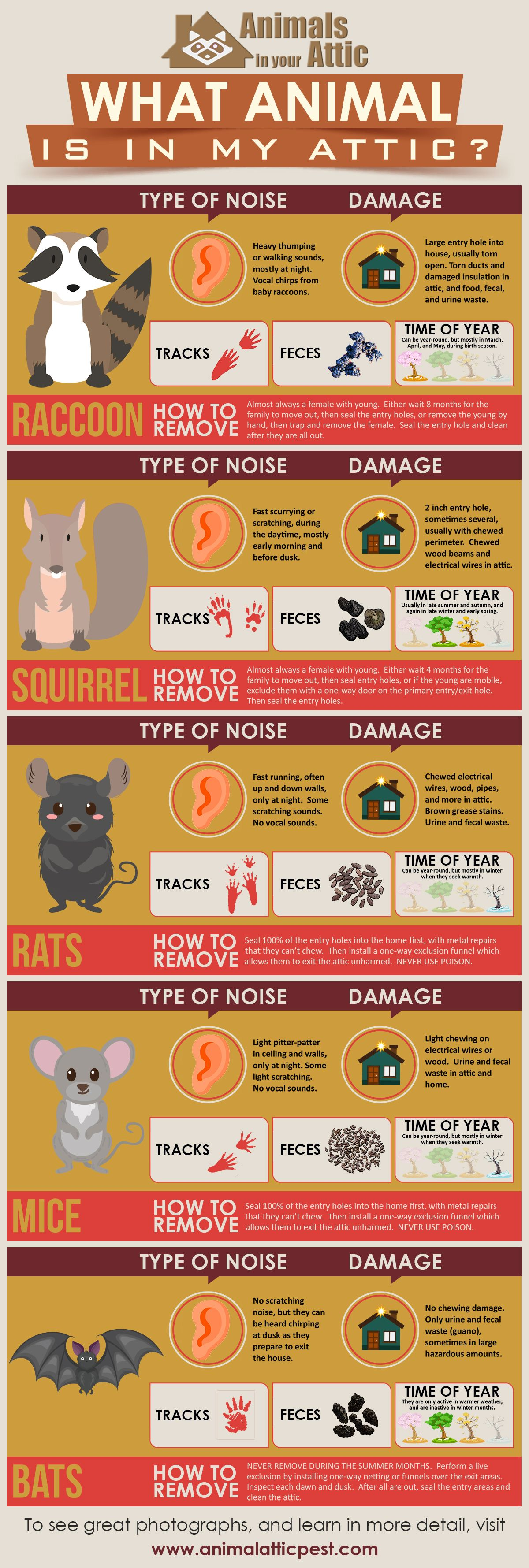 Find Out Which Animal Is In Your Attic Infographic Infographic Attic Get Rid Of Squirrels