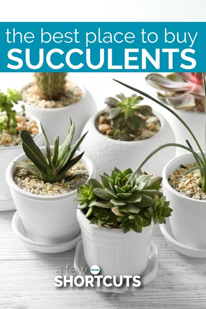 Do You Love Succulents But Aren T Sure Where To Them