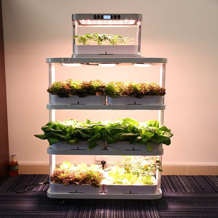 how to grow cotton indoors