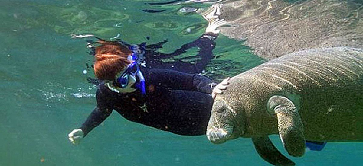 Kings Bay Manatee Tours (With images) Swimming with