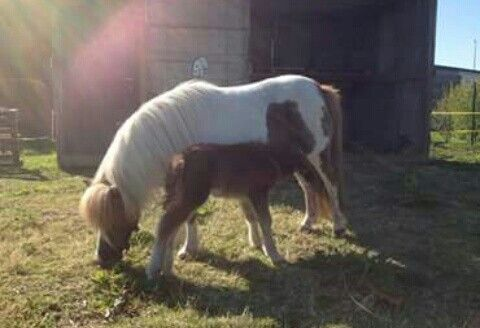 My verzorg paarden