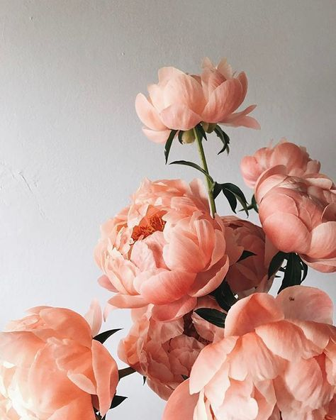 Wedding flowers ideas coral peonies #floral #coral #peonies