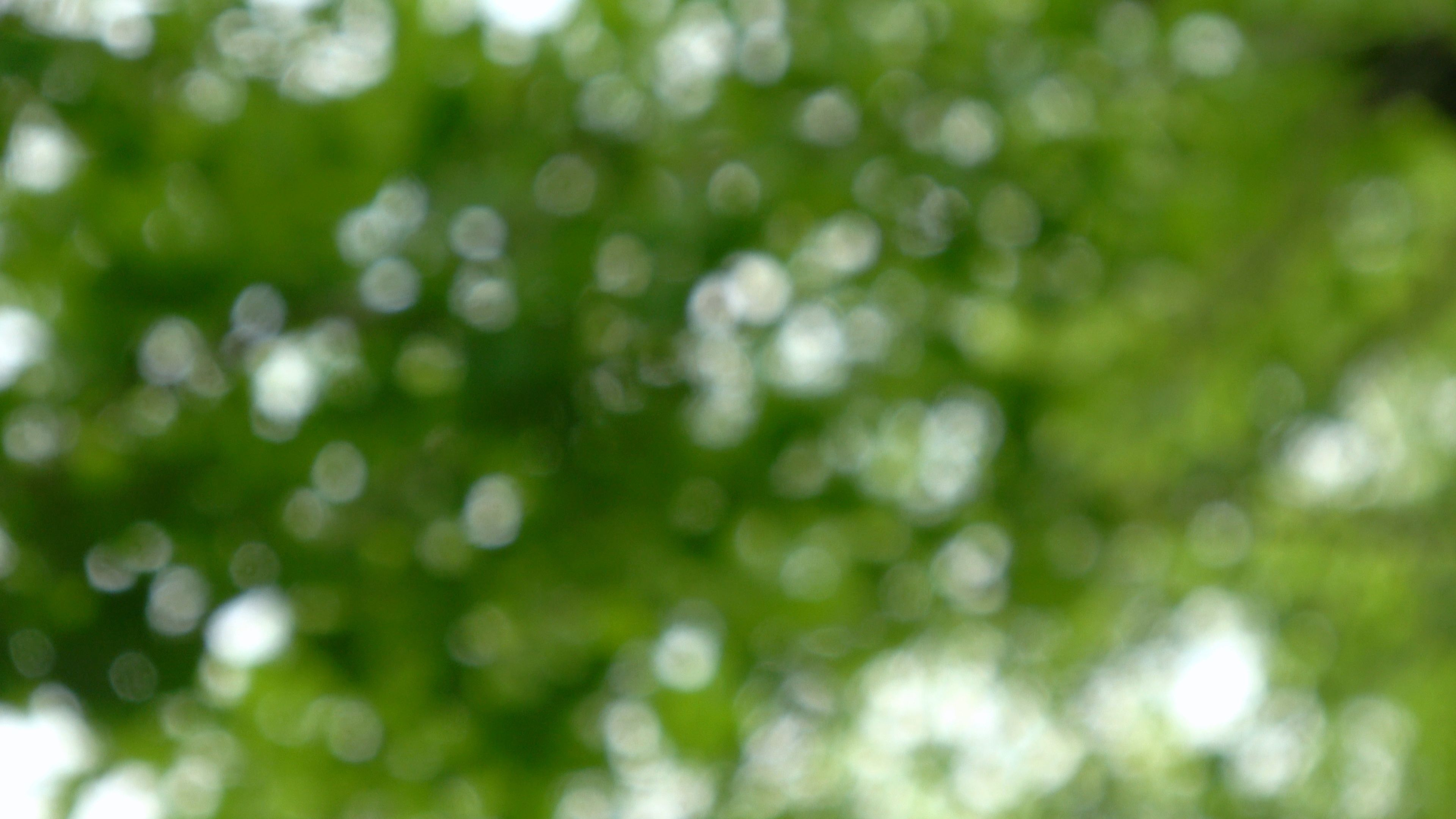 Abstract Nature Background Bokeh Footage Of Glowing Green Leaves In Sunlight Stock Footage Bokeh Footage Background Nature Backgrounds Abstract Nature Bokeh
