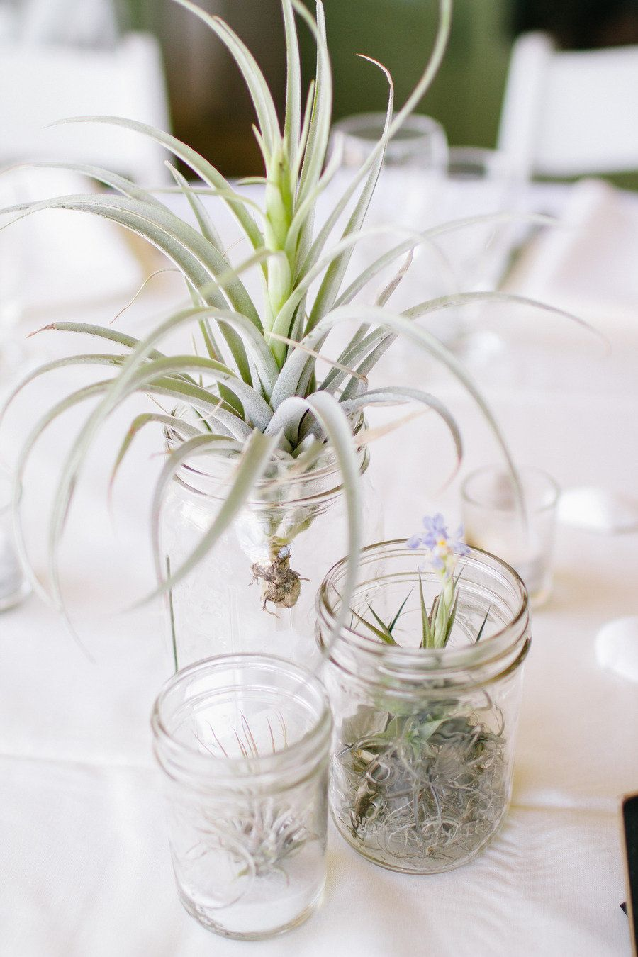 Simple mason jars with air plants--can also do succulents. Can plant ...