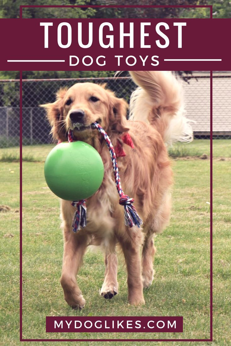 A Complete Guide To The Toughest Dog Toys 2020 Edition Tough