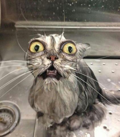 Мокрая киска молодой девочки фото фото 365-788