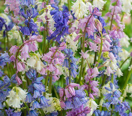 Specialty flower bulbs more white flower farm flowersgarden specialty flower bulbs more white flower farm mightylinksfo Gallery