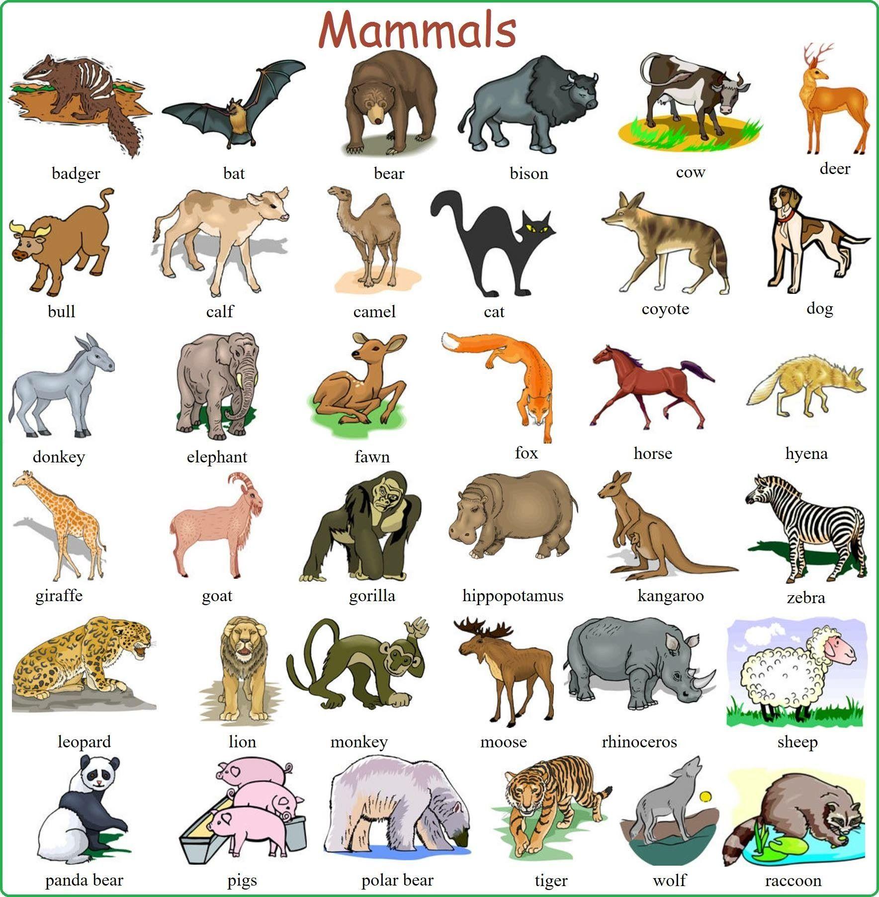Pin de Francisco Fraile en Ingles Animales en ingles