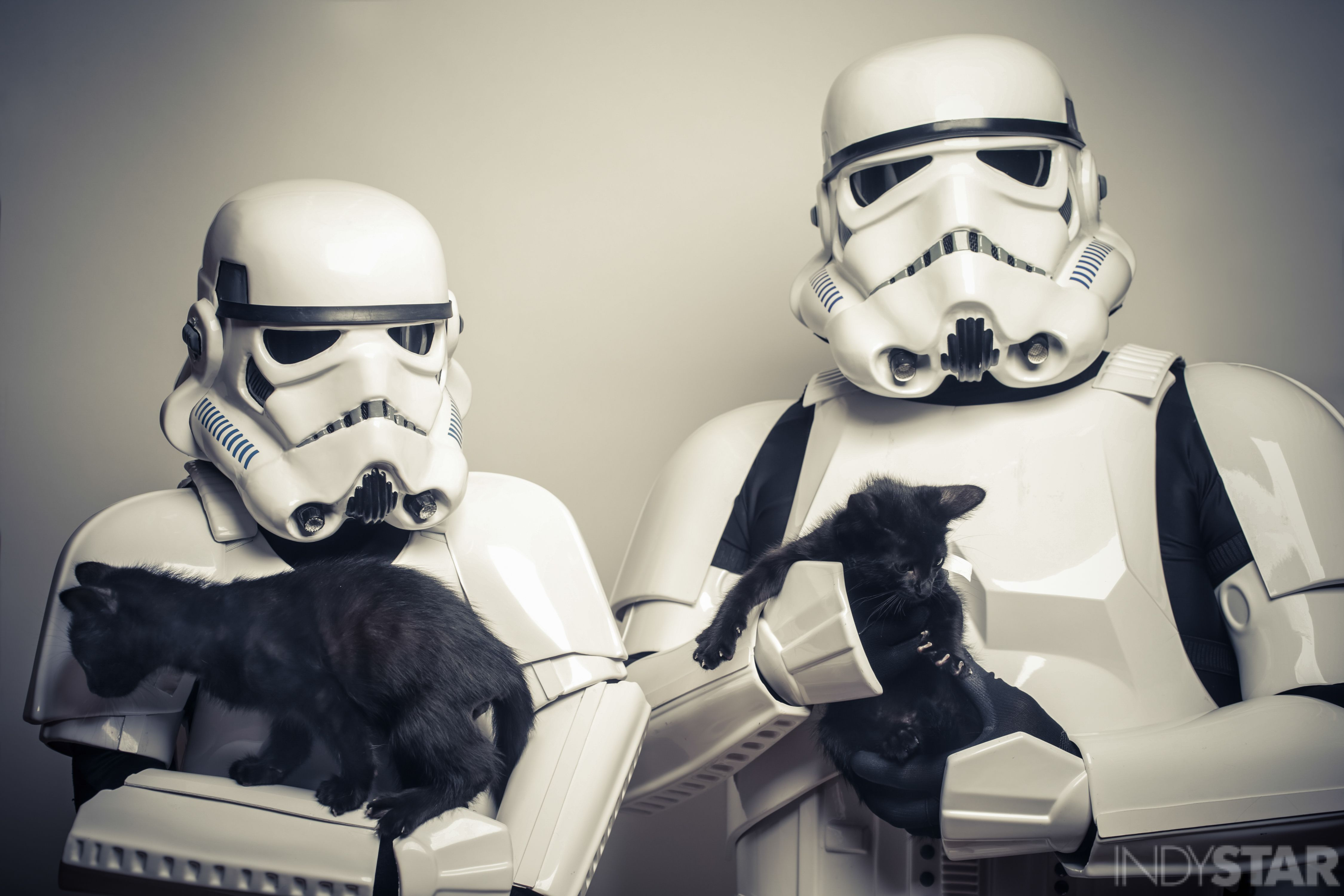 Star Wars, cat, kitten, FACE, Indianapolis Star, force