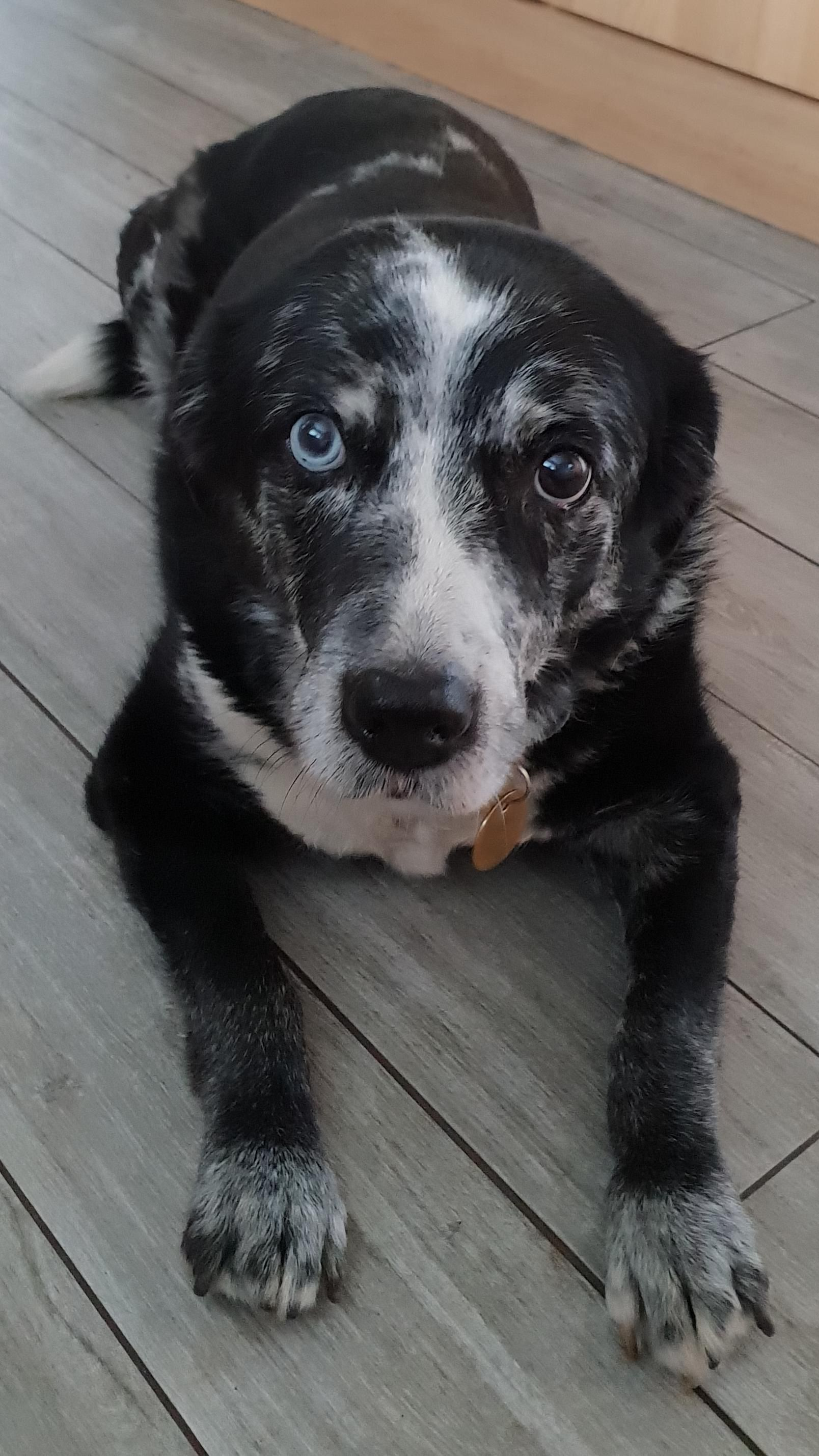 Welcome to | My best friend, Best friends, Passed away