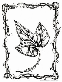 Ivy Drawings For Our Birth Flowers Of The Month January Collection Wonderweirded Official Wildlife Printable Outline Leaf