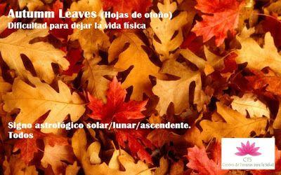 CTS-CENTRO DE TERAPIAS PARA LA SALUD: Autumm Leaves