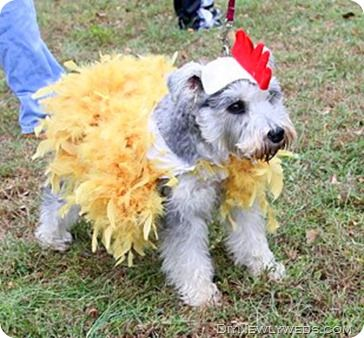 Chicken dog costume diy newlyweds diy home decorating ideas chicken dog costume diy newlyweds diy home decorating ideas projects october 2011 solutioingenieria Images