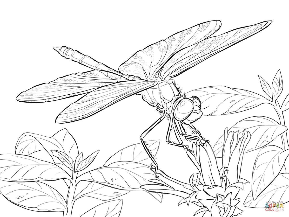 Free Dragonfly Coloring Pages for Adults | Yellow Winged Darter ...