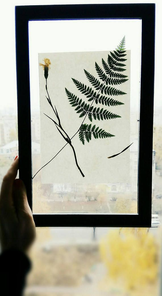 Botanical wall hanging 13x9 6 in wall art real flower fern