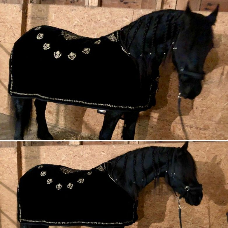 Pin By Pearl Schabracken Manufaktur On Abschwitzdecke By Pearl Schabracken Horse Rug Fleece Blanket Show Rug Baroque Tack Horse Rugs Mini Horse Horse Blankets