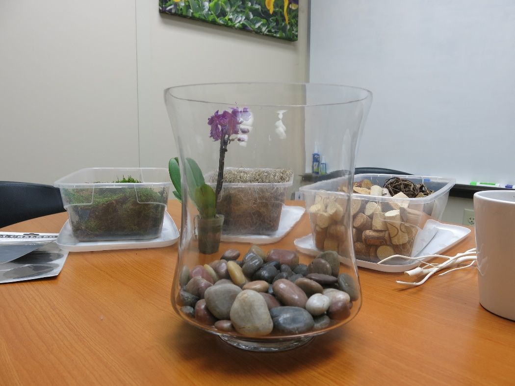 Help Your Plant Thrive With This Diy Orchid Terrarium Plants