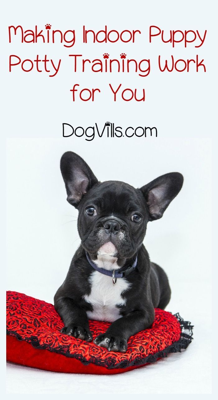 Making Indoor Puppy Potty Training Work For You Dog Pee Dog