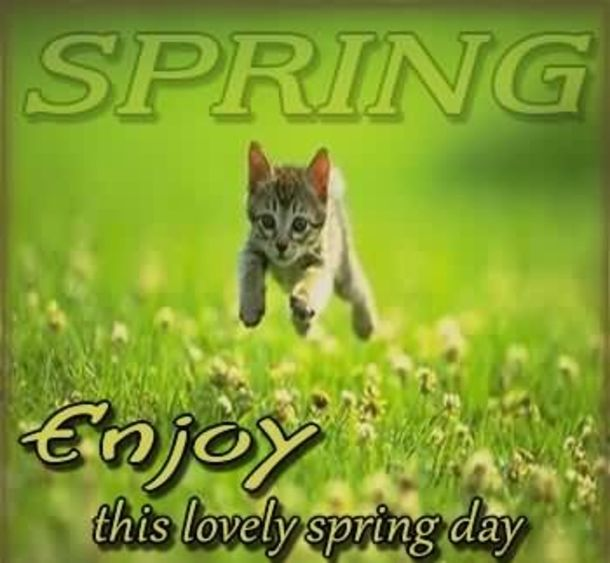 100 Quotes To Get You Ready For Spring Funny Saturday Memes Spring Quotes Saturday Memes