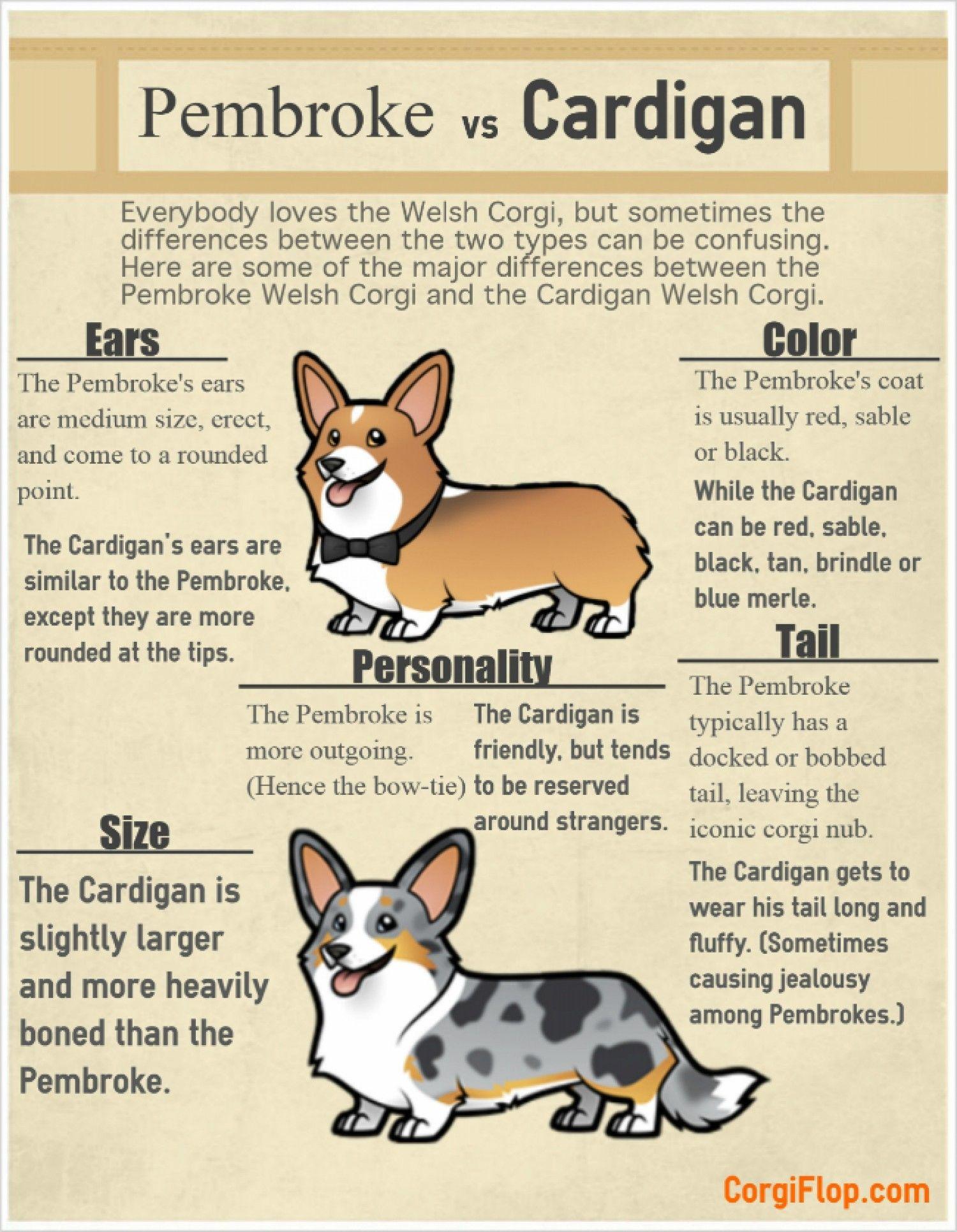 Pembroke Vs Cardigan Infographic For Fido Corgi Corgi