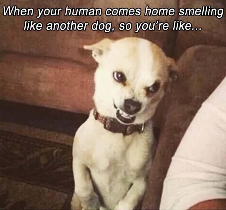 Your Human Funny Animal Memes Funny Animal Jokes Cute Animal Memes