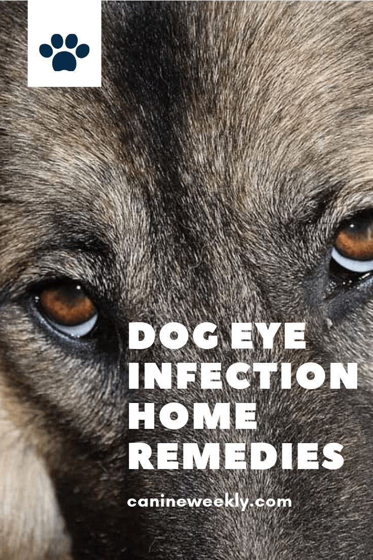 Dog eye infection home remedies symptoms and natural