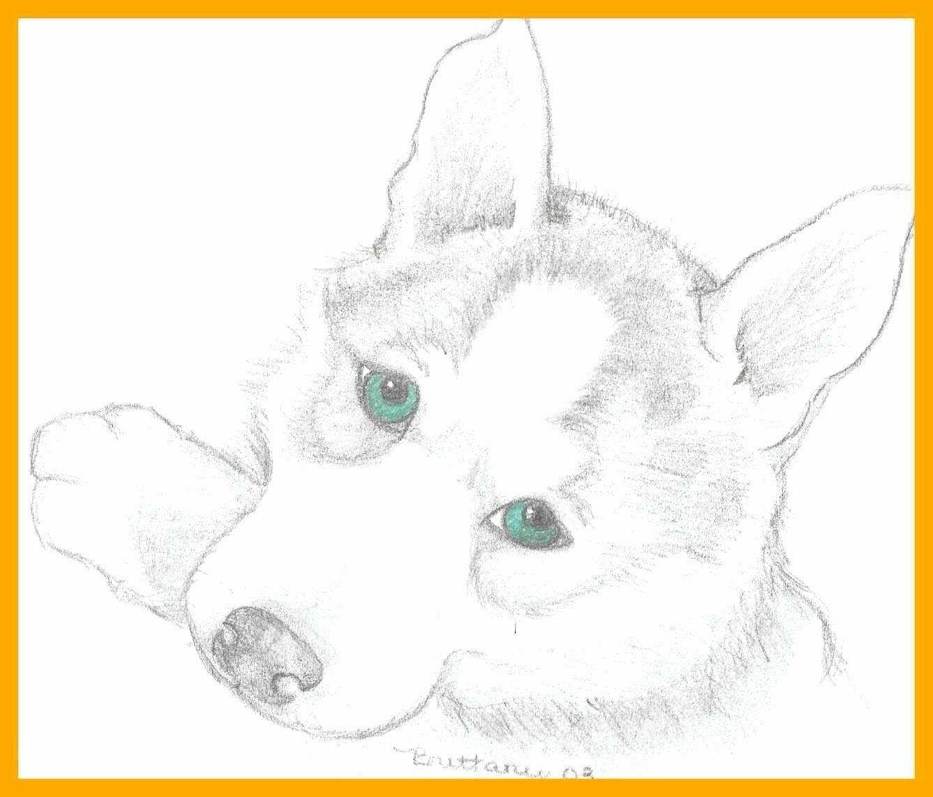Country Girl Coloring Pages New Engrossing Husky Coloring Pages Flingtheoryub Dog Coloring Page Puppy Coloring Pages Animal Coloring Books [ 1142 x 1337 Pixel ]
