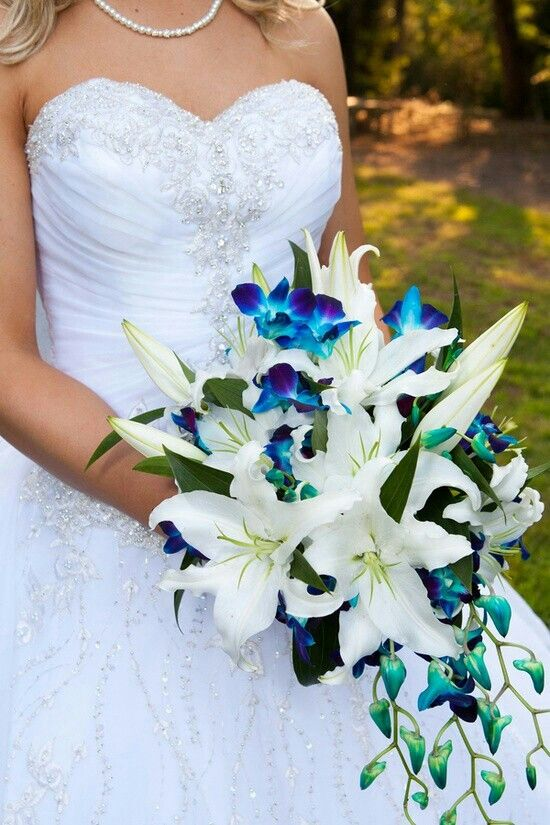 Elegant Cascading Bridal Bouquet Comprised Of White Casablanca Lilies Blue Dendrobium Orchids