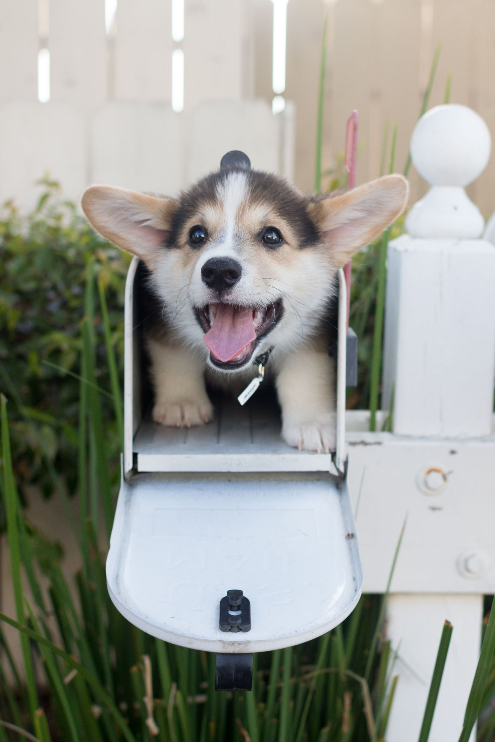 25 Tiny Dogs That Will Fit Perfectly In Your Tiny House Cute